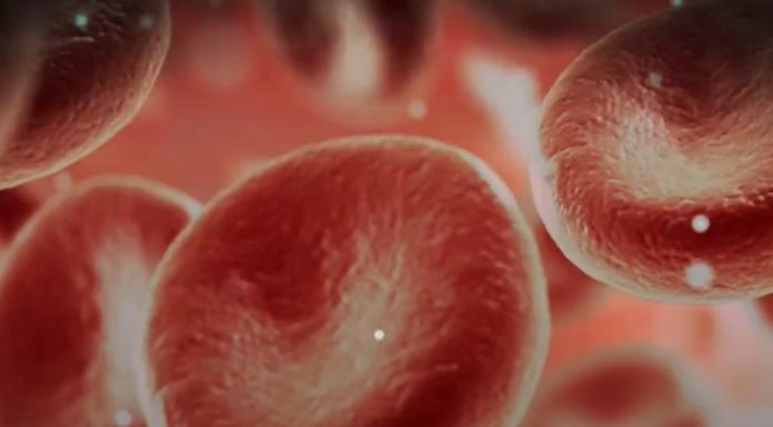 Durch Blutplasma von Jugendlichen das Altern stoppen?
