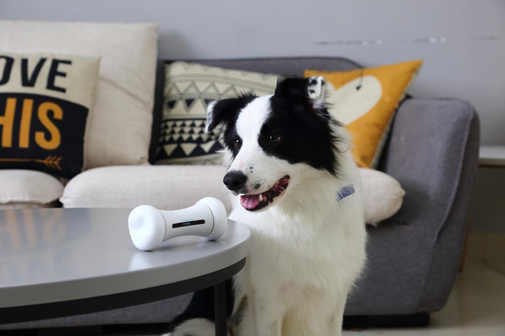 Dog-playing-with-wickedbone-toy