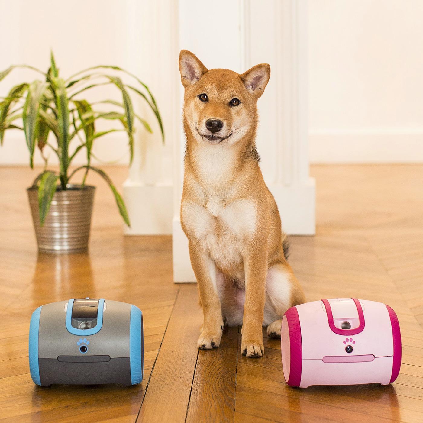 Laika Robotic Dog Toy Companion – Gadgets | StartupTV