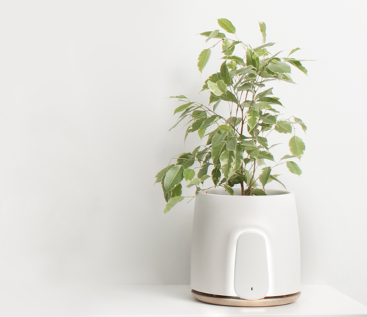 Clairy air purifier with a plant in it.