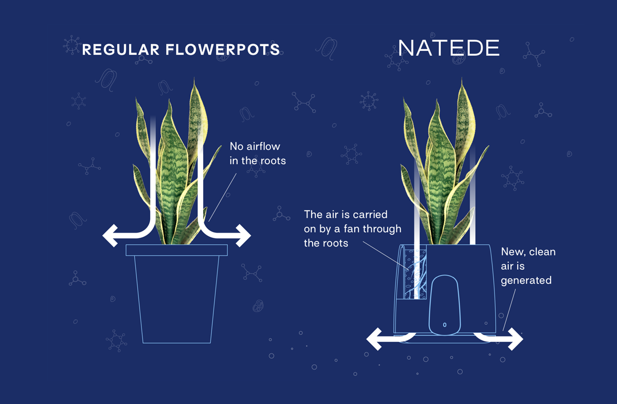 Clairy air purifier compared with regular flower pot on a dark blue background.