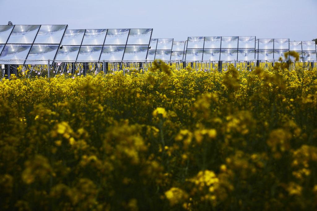 Heliac's solar fields in the Netherlands. Photo courtesy of Thomas Tolstrup.